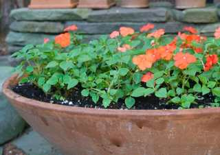 """Did I say """"impatiens""""? Everyone wanted to know why I dared use any, with impatiens downy mildew still such a problem domestically and in Europe. Well, I thought I'd try. Just one big bowl (just planted, above) and a few here and there in nearby pots. We shall see."""