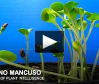 'plants are not just able to live; they are able to sense.'–stefano mancuso