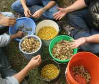 seed libraries in the headlines: some grounding perspective, from ken greene