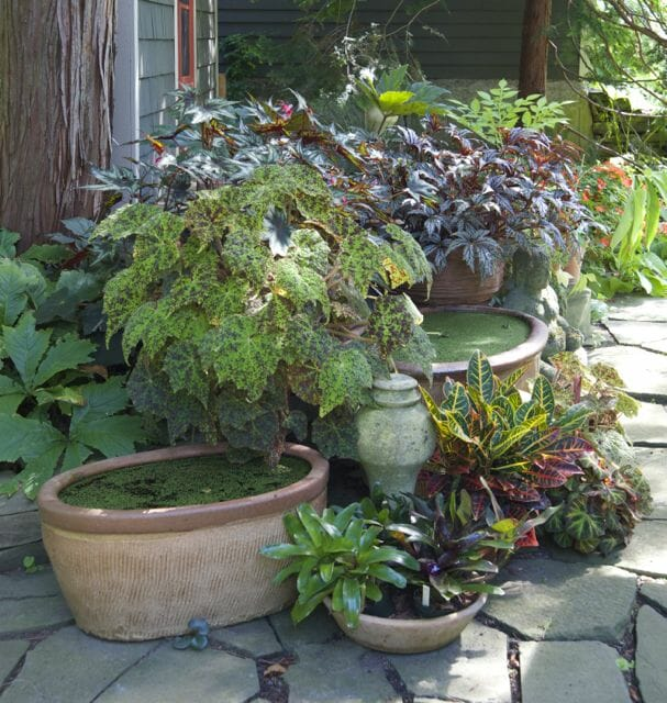 houseplants outside