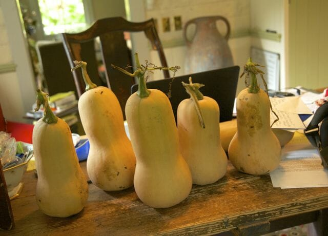 desk full of butternut