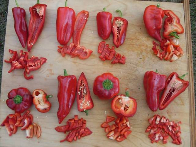 Pepper_Tasting1