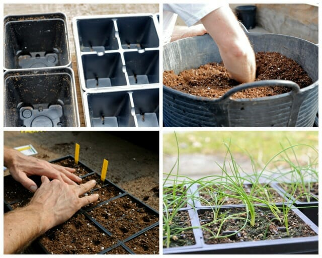 your input, please: what do you want to know about growing from seed?
