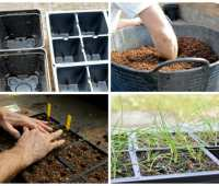 how to start seeds: 18 confidence-building tips