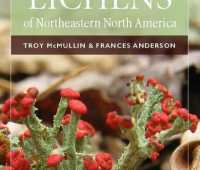 common lichens of northeastern n. america