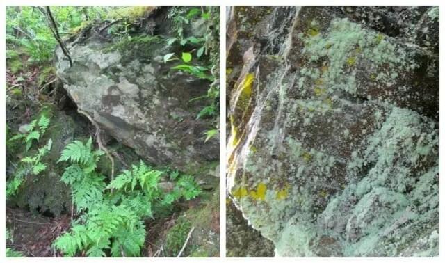 james lendemer lichens