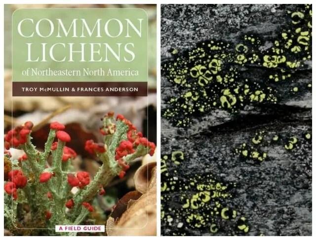 nybg lichens 4
