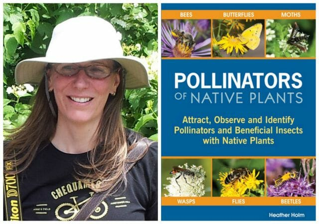 heather holm pollinator book