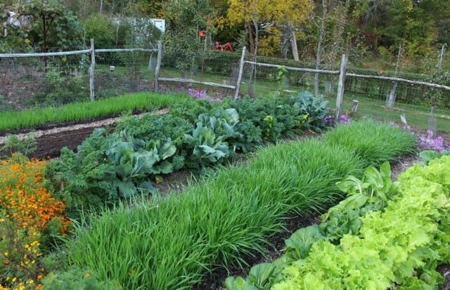 N-garden-beds-Oct