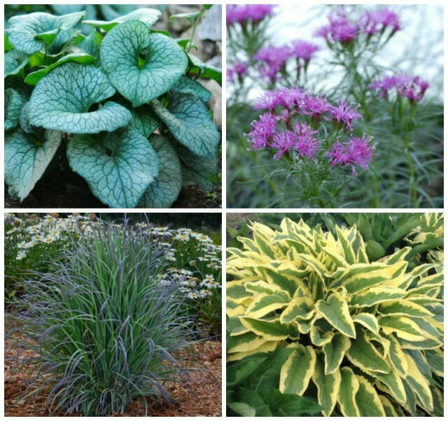 time tested perennials