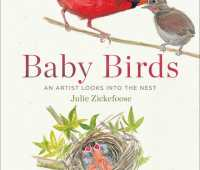 baby birds: an intimate look inside the nest, with julie zickefoose