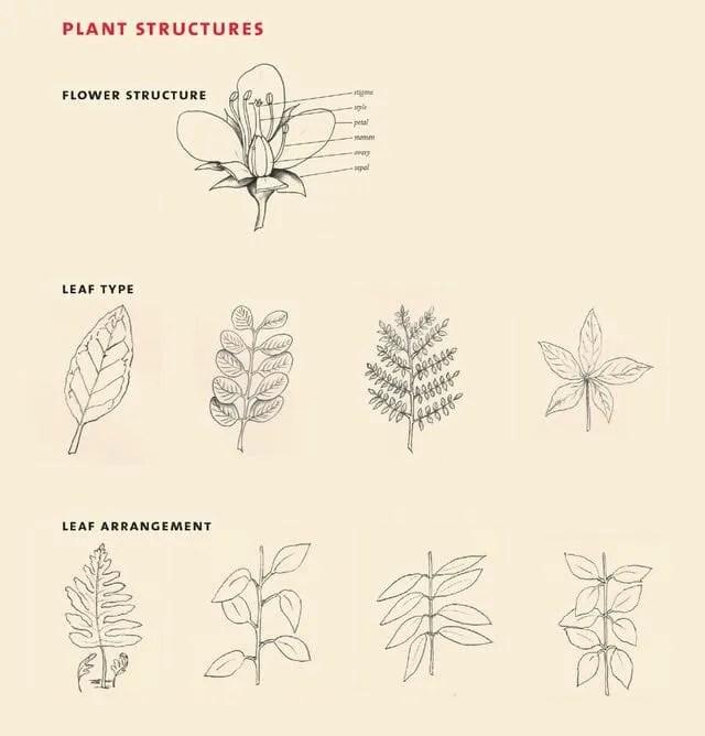 Canada Ag Dept leaf shapes