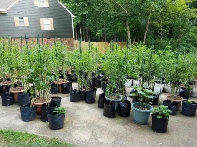 Craig LeHoullier's driveway garden