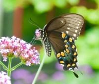 hello, butterflies (with a little help from a friend)