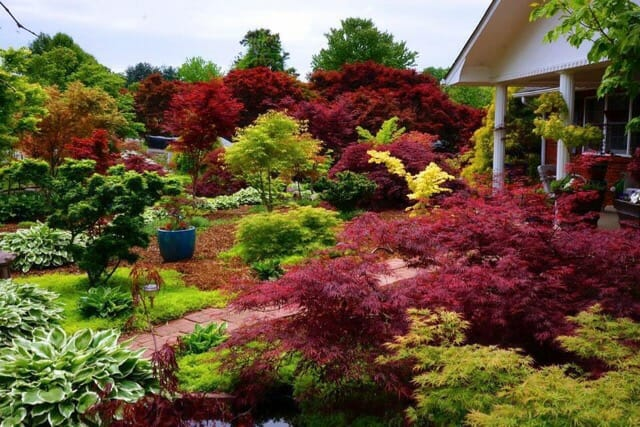 A World Of Unusual Japanese Maples Ginkgoes And Metasequoias