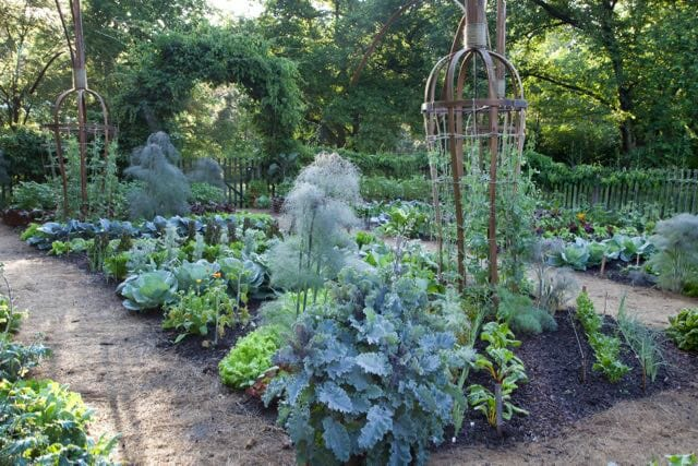 proactive fall vegetablegarden cleanup with chanticleers david