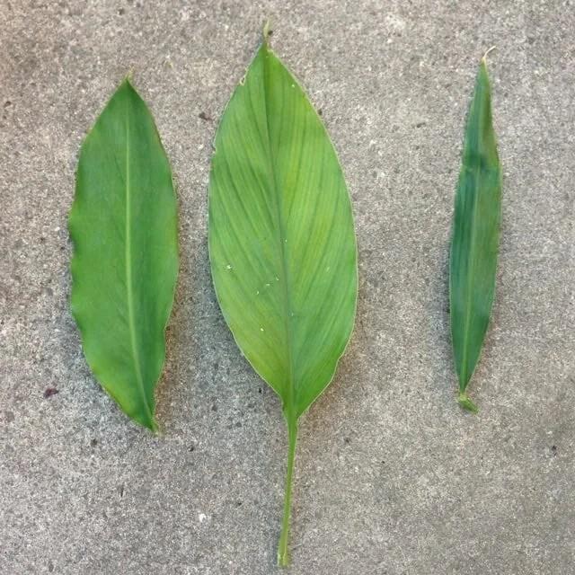 herb-leaves-gayla-trail