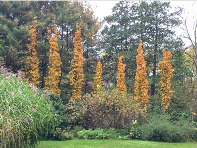 using columnar trees and shrubs with ken druse A Way To Garden