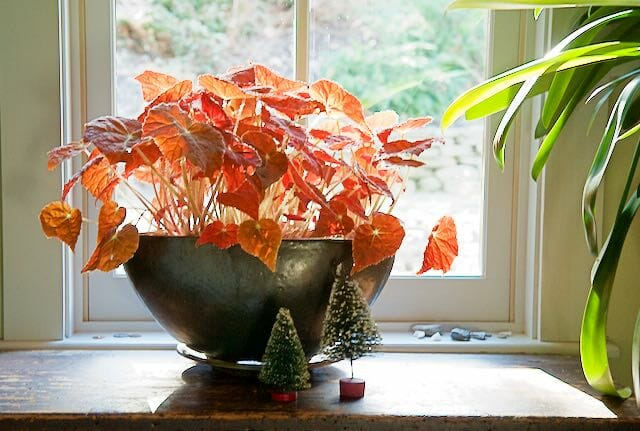 3 Gifts Any Gardener Will Treasure