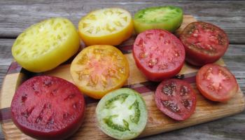 there's more than one way to ripen a tomato - A Way To Garden