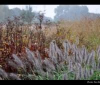multi-season perennials at allen centennial garden, with ben futa