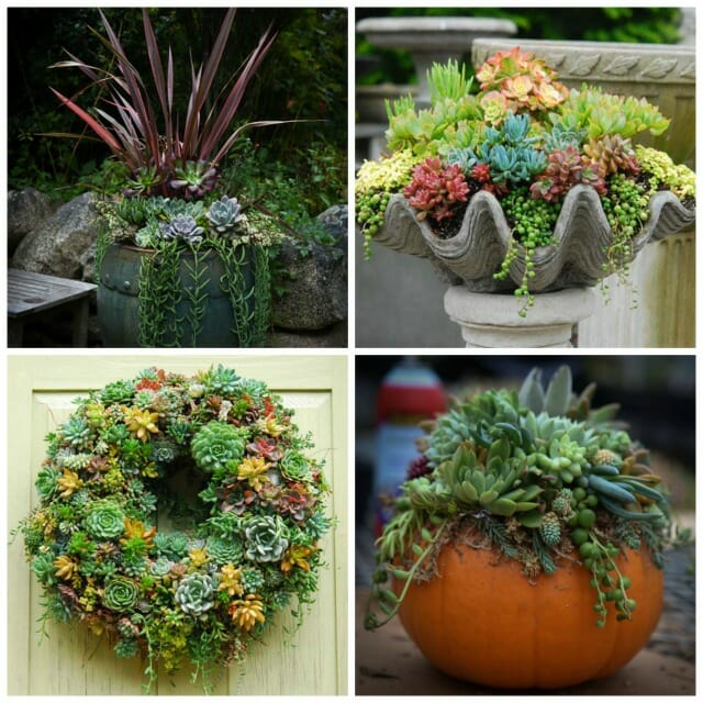 succulents in containers and succulent wreath