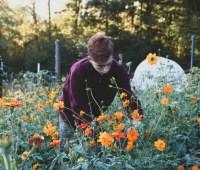meet travis cox, age 17, 'the garden scout'