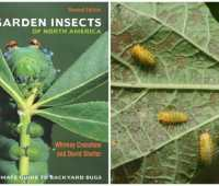 getting to know your garden insects, with dr. david shetlar