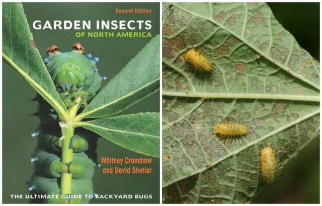 getting to know your garden insects, with dr. david shetlar - A Way ...