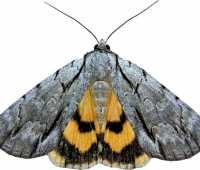 why moths matter (and how to get to know them), with seabrooke leckie