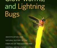 Fireflies, Glow-Worms and Lightning Bugs