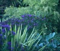 top late perennials, + smart care tips for a garden to last through fall, with kathy tracey