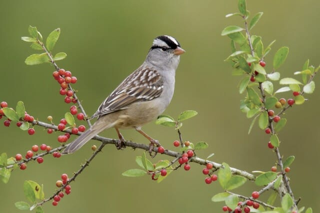 getting to know sparrows, with rick wright