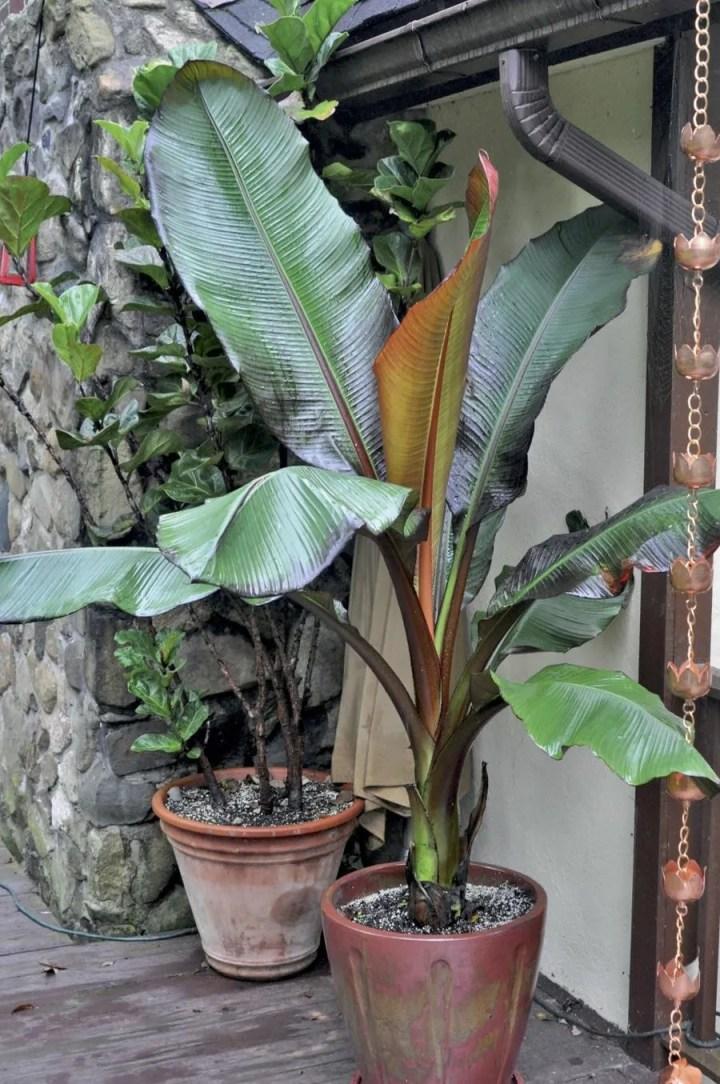 'best friend' tropical plants, with marianne willburn
