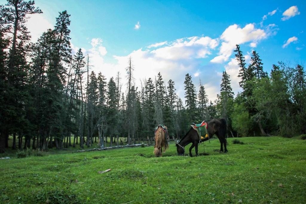 Our horses hobbled in Bogd Khan Ulu National Park, Mongolia horse trek.