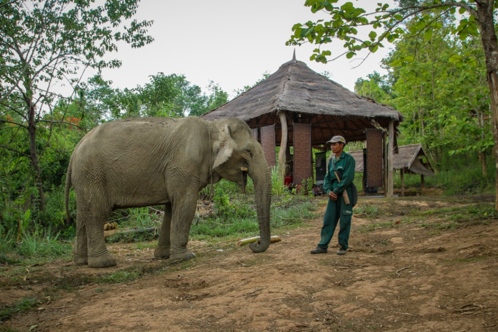 A mahout with his elephant at the Elephant Conservation centre in Sayaboury, Laos.