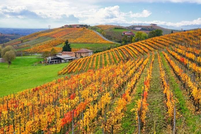 Винный и гастрономический маршрут в Пьемонте