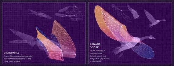 Анимированная визуализация механики полета (GIF)