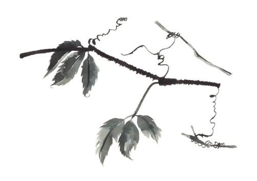 Чернильно-акварельные веточки и растения киевского каллиграфа Наталии Гут
