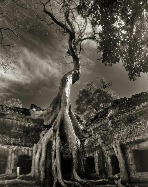 Árvores Ancestrais (17)