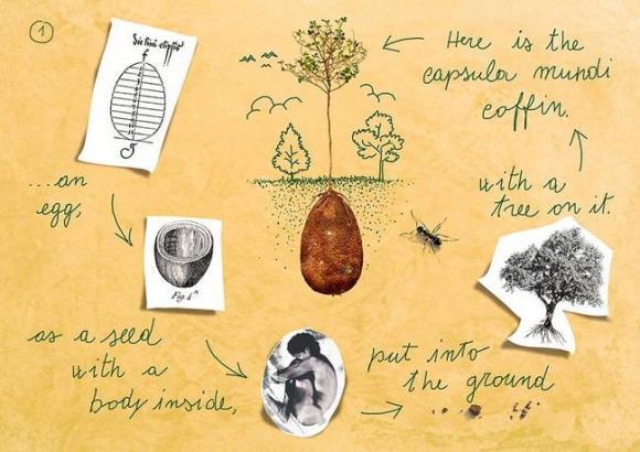 Caixão orgânico (3)