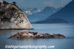 Sea Lions in Glacier Bay National Park, Alaska