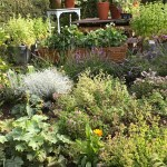 Herbs and Summer Gardening