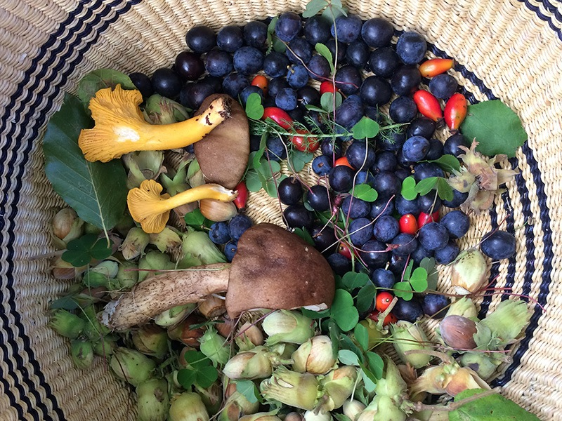 Foraging Fortnight