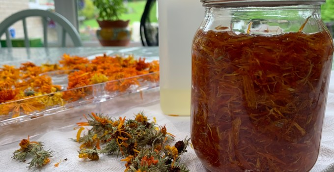 In The Herb Garden – The Calendula Project