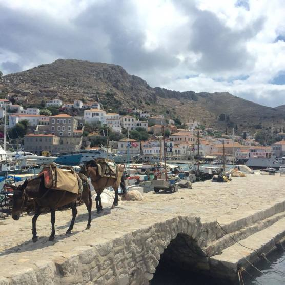 Mules in the port of Hydra