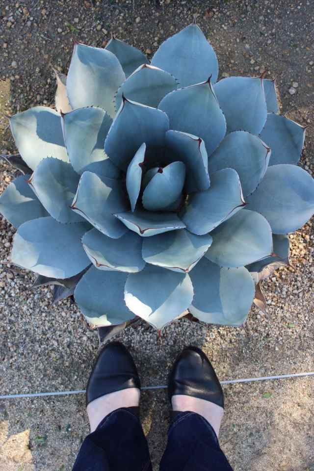 Eieen Fisher shoes at the Annenberg Estate