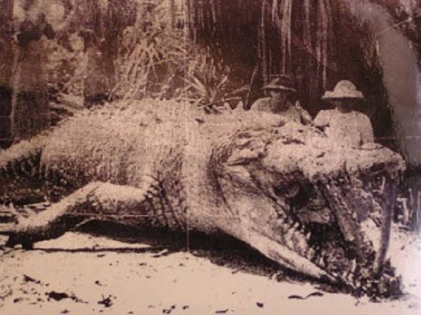 huge crocodile in australia