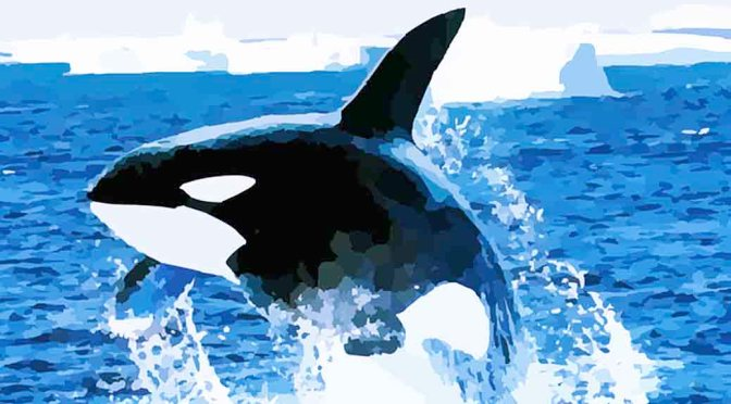 Killer Whale's Ingenious Trick To Kill Sharks