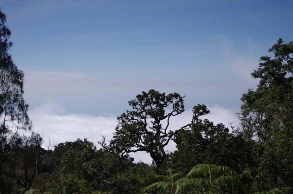 Lombok 2012 (CC http://awesomatik.wordpress.com)